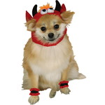 ハロウィンSPECIAL Lil' Devil Dog Costume